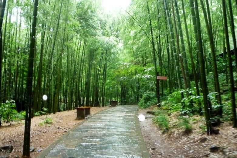 """江苏行——溧阳""""南山竹海"""""""